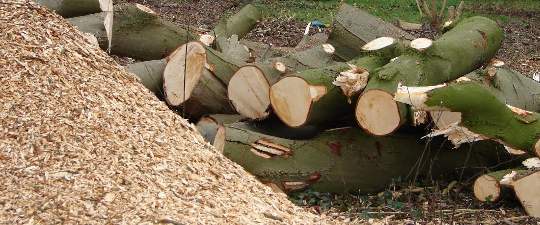 Snoeien en boomkap